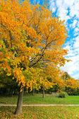 Hermoso árbol otoñal en el parque — Foto de Stock