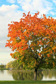 Colorful tree near the river — Stock Photo