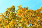 Fogliame autunnale vividi sopra cielo blu — Foto Stock