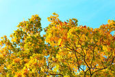 Vivid autumnal leafage over blue sky — Стоковое фото