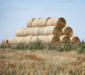 Golden haystack on the meadow — Stock Photo