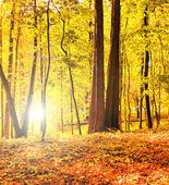 Belle forêt automnale — Photo
