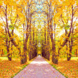 Stock Photo: Beautiful diminishing alley in autumnal golden orchard
