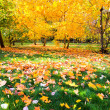 Beautiful colorful autumn park in sunny day — Stock Photo #7291803