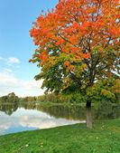 Reddish wood near beautiful lake with green grassy banks — Stock Photo