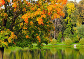Lebendigen herbstfarben leafage spiegelt sich in fluss — Stockfoto