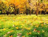 Prachtige kleurrijke herfst park in zonnige dag — Stockfoto