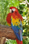 Parrot - Red Blue Macaw — Stock Photo