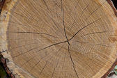 Tree trunk after being cut — Stock Photo