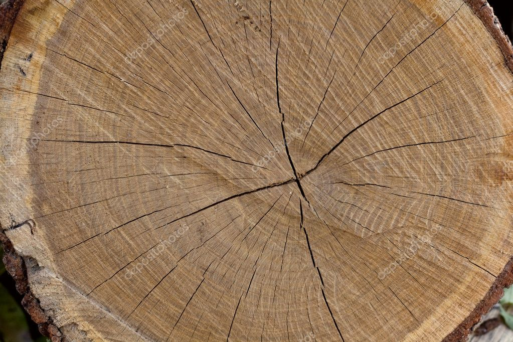 Tree trunk after being cut, background — Stock Photo #7392715