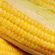 Fresh corn — Stock Photo