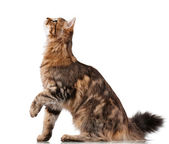 Gato bonito — Fotografia Stock