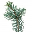 Fir branch — Stock Photo #7800445