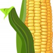 Stock Vector: Ripe corn