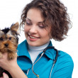 Veterinarian with Yorkshire Terrier — Stock Photo