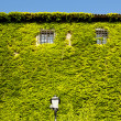 Facade of St. Giusto castle covered with green ivy, Trieste — Stock Photo