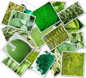 Green photos — Stock Photo