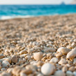 Stock Photo: Gravel on the beach