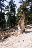 Tree broken — Stock Photo