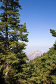Alberi in montagna enos — Foto Stock