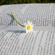 Royalty-Free Stock Photo: Daisy on book