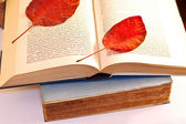Dry leaves on a open book — Stock Photo