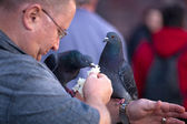 Pigeon and man — Stock Photo