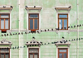 Pigeons on wires — Stock Photo