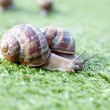 snails — Stock Photo #7740128