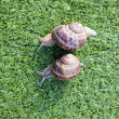 Stock Photo: Snails
