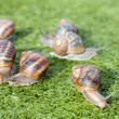 Snails — Stock Photo #7740250