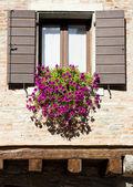 Ventana con las flores — Foto de Stock