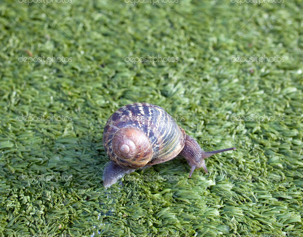 Snails — Stock Photo #7740027