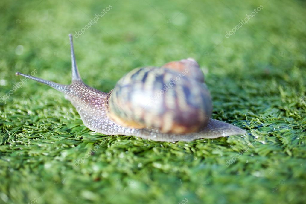 Snails — Stock Photo #7740045