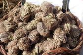Dried Plant — Stock Photo