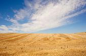 Spanish countryside — Stock Photo