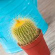 Royalty-Free Stock Photo: Little Cactus plant