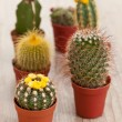 Little Cactus plant — Stock Photo #6867037