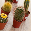 Little Cactus plant — Stock Photo #6867072