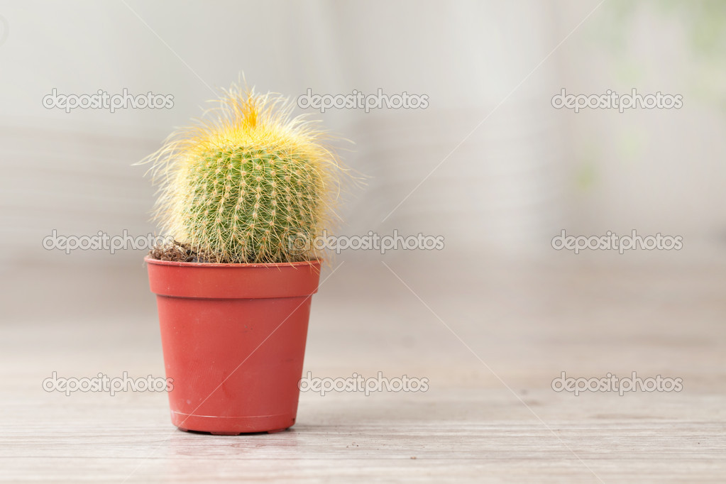 маленький кактус