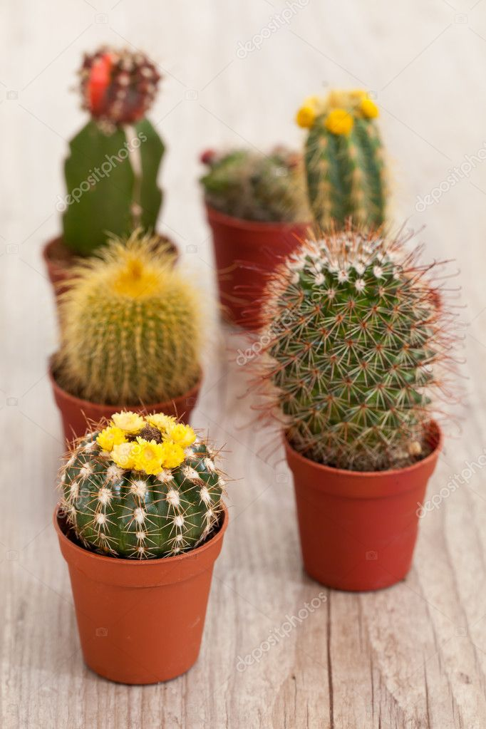 Little exotic spiked cactus plant for interior decoration  Stock Photo #6867037