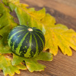 Decorative pumpkin — Stock Photo #6977715