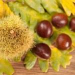 Chestnuts — Stock Photo