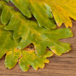 Stock Photo: Chestnuts leaves