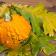 Decorative pumpkin — Stock Photo #6993967