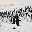 Large group of penguins — Stock Photo #7229245