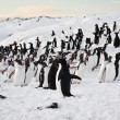 grand groupe de pingouins — Photo
