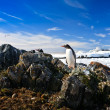 Penguins nest — Stock Photo #7229265