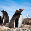 Pinguine in der Antarktis — Stockfoto