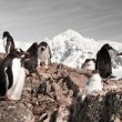 Penguins in Antarctica — 图库照片